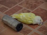 BahrainTearGasedBird
